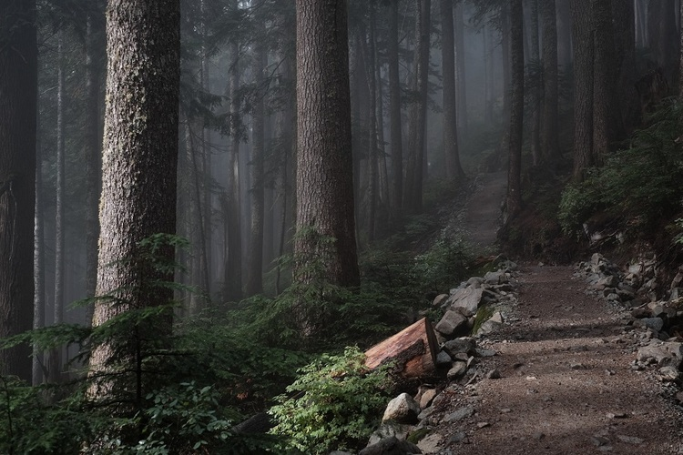 Gravel Biking Top Races Forest Trail